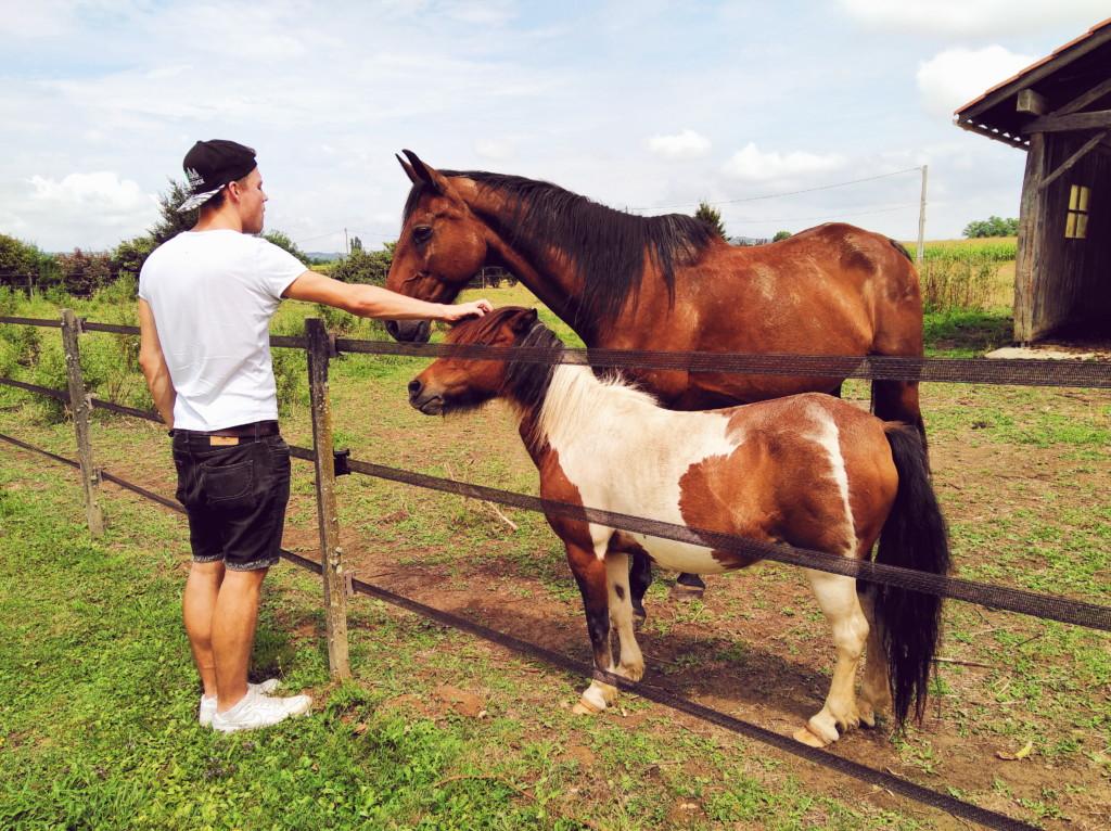 un week-end à la campagne entre Drôme et Isère : chevaux