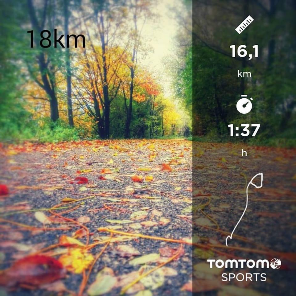 ma rétrospective : allée recouverte de feuilles en automne
