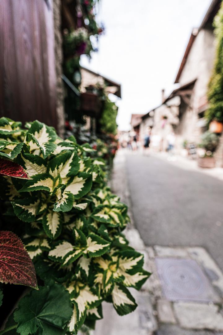 Yvoire, fleurs village